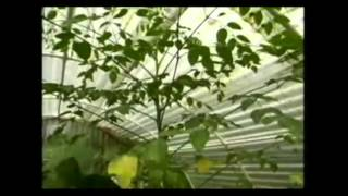 Oleifera Moringa Fights Malnutrition   Discovery Channel Documentary