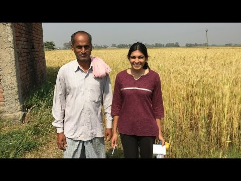Research Spotlight: Satellite data helps Indian farmers boost crop yields