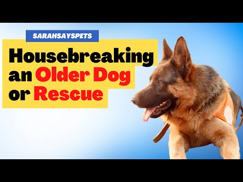 House Breaking Older Dog or Rescue | Sarah Hodgson | Modern Dog Parenting