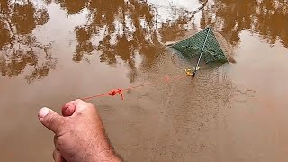 Catching yabbies with dry dog food in stockings