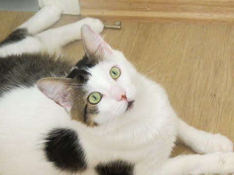 Konuşan kedi ŞANS (1)