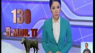 На территории Казахстана обитают 130 особей снежного барса