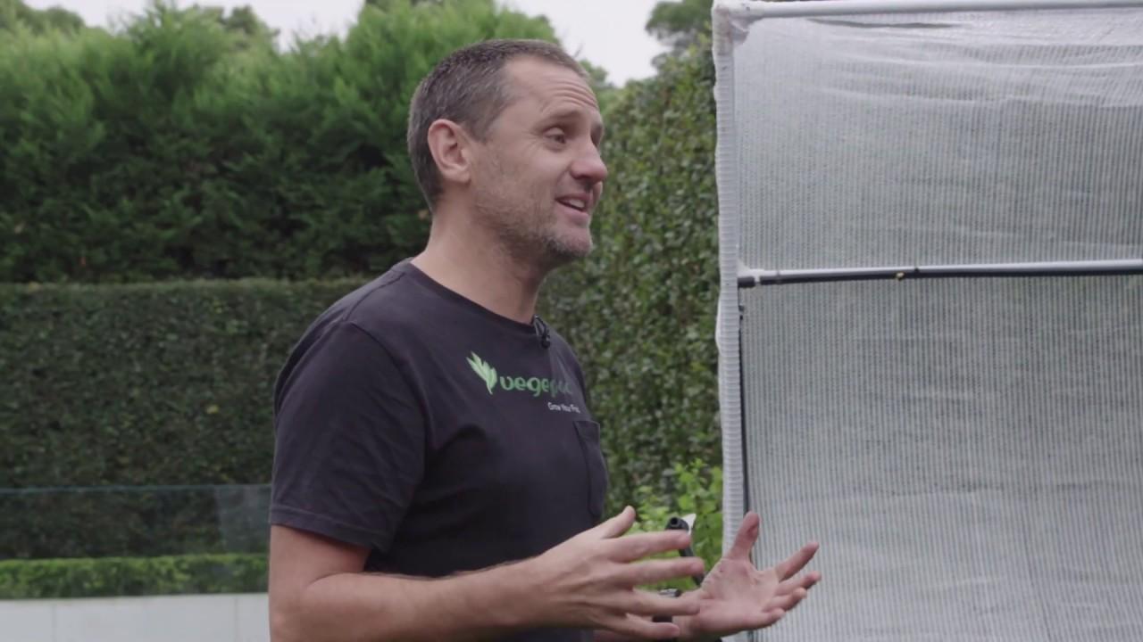 5 tips for creating your own veggie garden