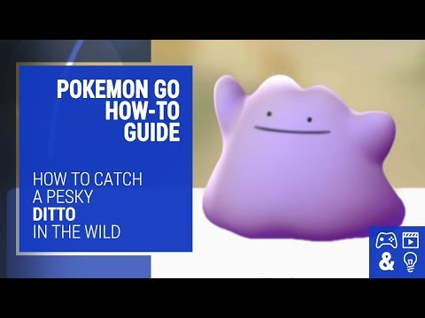 How To Catch Ditto In Pokemon Go - How-To Guide And Tips
