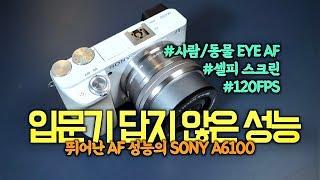입문용 카메라 AF 성…