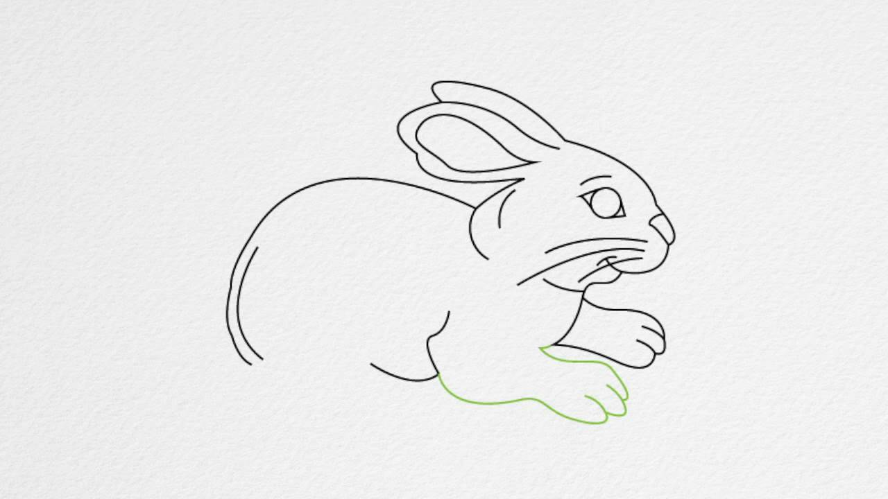 how to draw a rabbit step by step youtube