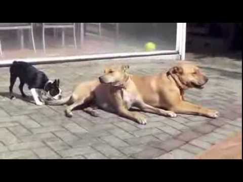stop-dog-barking-video:-learn-how-to-train-a-dog-not-to-bark!!!-[easy...]