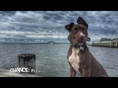 Off Leash K9 Training Highlight Reel-Dogs with Amazing Obedience