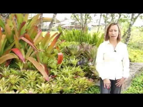 Orquideas y bromelias jardin orchids gardens youtube for Jardines de orquideas