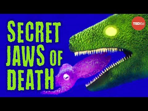 """Video image: Real-life """"Alien"""" jaws - Darien Satterfield"""