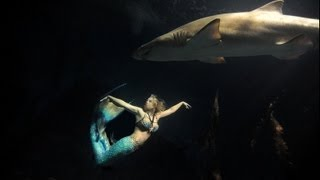Mermaid Melissa Swimming with Sharks