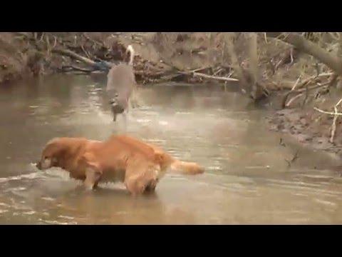 Dancing Deer 2, no Music version with dog