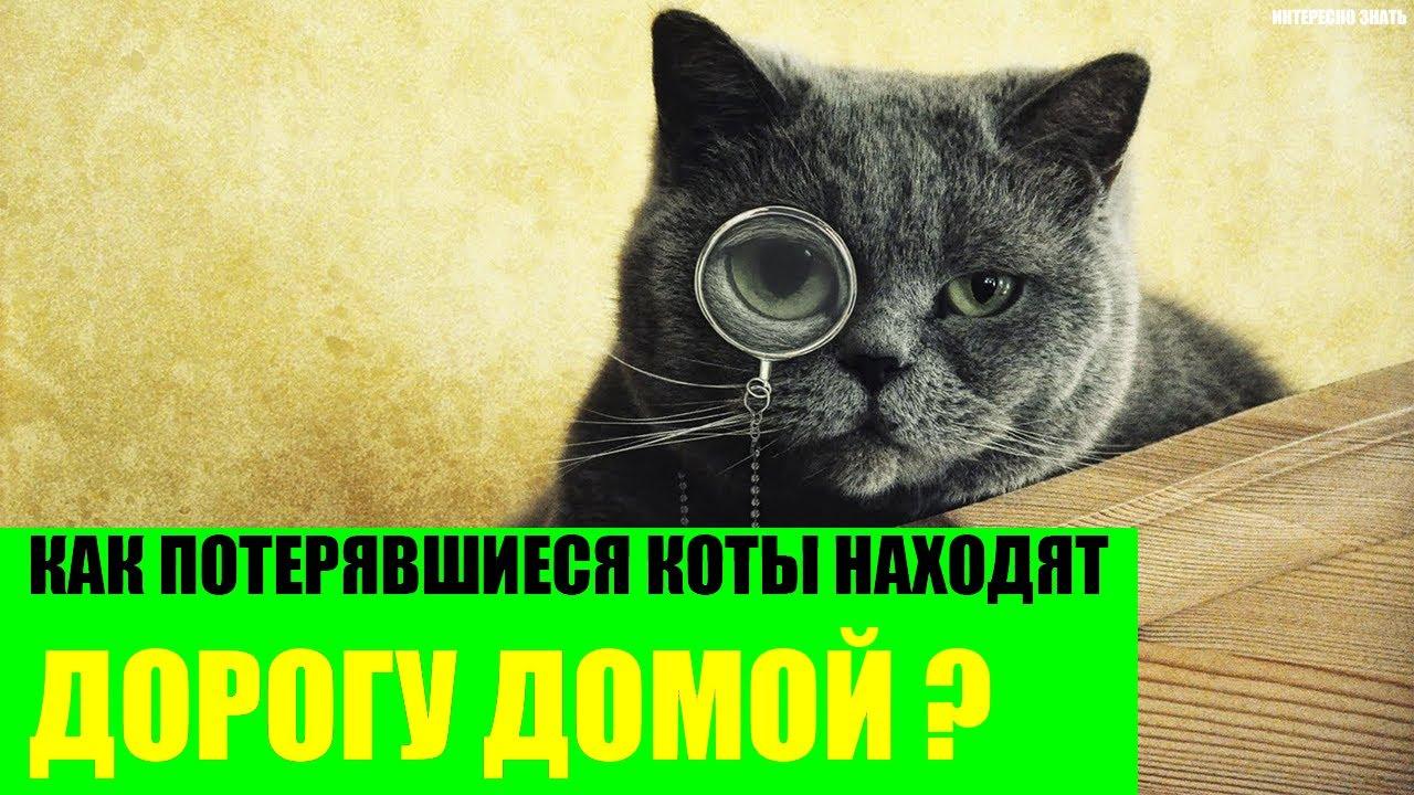 Как находят домой дорогу коты если потерялись