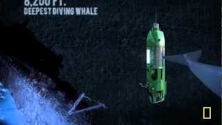 Deepsea Challenge: Long Way Down (Mariana Trench)