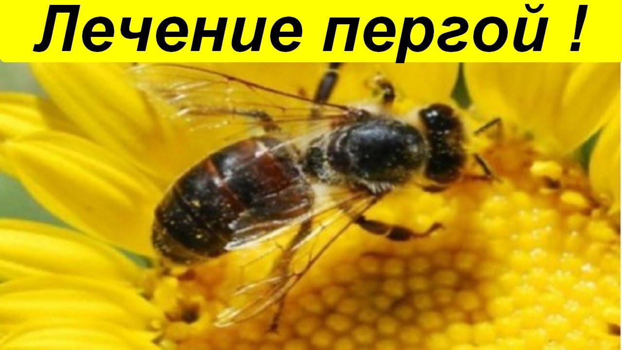 Лечебные свойства пчелиной перги. Как принимать хлеб пчёл