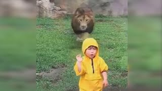 lion lunges at boy at zoo in japan