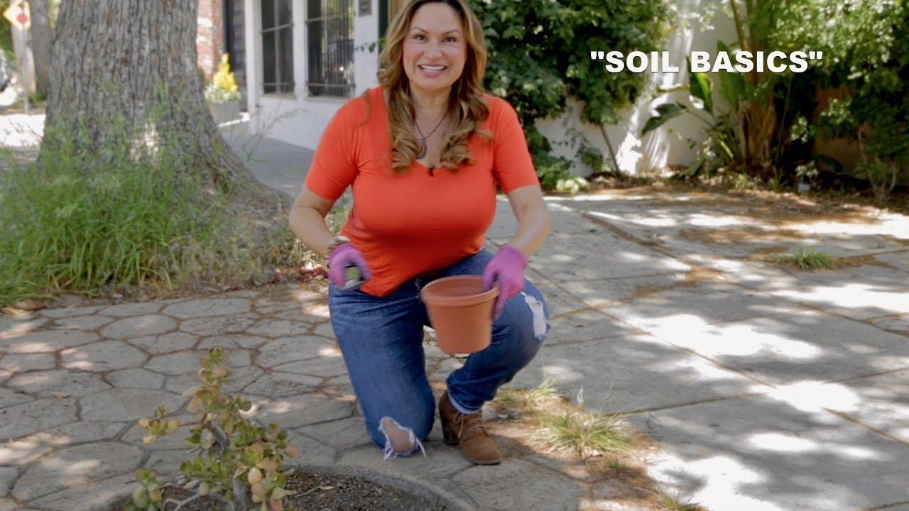 Soil Basics: Potting Soil Or Planting Mix?