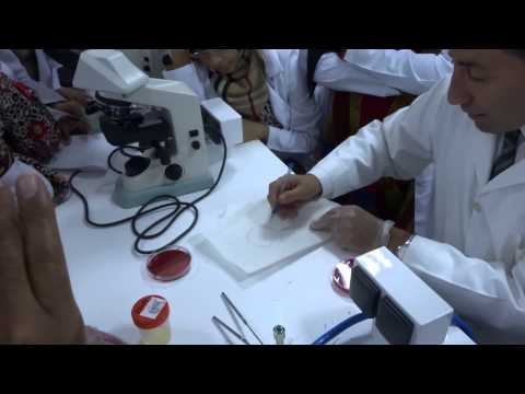 Microbiology - Inoculation of clinical specimens - Practical Lab