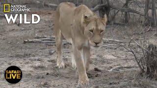 Safari Live - Day 251 | Nat Geo Wild