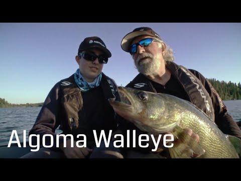 Algoma Walleye At Lodge 88 | Esnagi Lake | Fish'n Canada