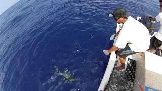 2014 ep 25 palu ahi 2 3 shibi yellowfin tuna fishing kona hawaii gopro