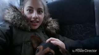 Забрали собаку с приюта❤