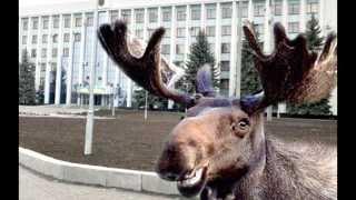 лось в ижевске(, 2013-09-10T13:40:15.000Z)