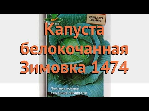Капуста белокочанная Зимовка 1474 (zimovka 1474) 🌿 обзор: как сажать, семена капусты Зимовка 1474   белокочанная   зимовка_1474   капуста   zimovka_1474   обзор   zi