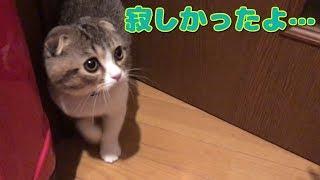 ゴロゴロ甘えるの可愛すぎ!ツンデレな子猫がご主人をお出迎えする姿が最高