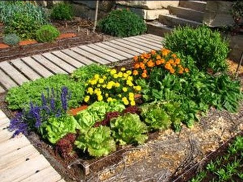 Huertos ecol gicos en las ciudades youtube for Asociacion de plantas en el huerto