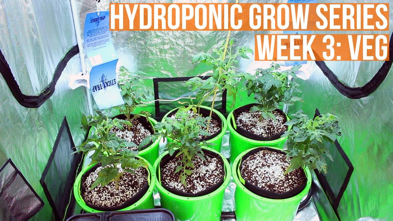 Complete Hydro Grow Tent Kit System - Week 3 Grow Journal | Harvest by week 12  sc 1 st  YouTube & Complete Hydro Grow Tent Kit System - Week 3 Grow Journal ...