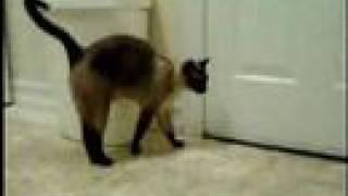 Crazy talking cat