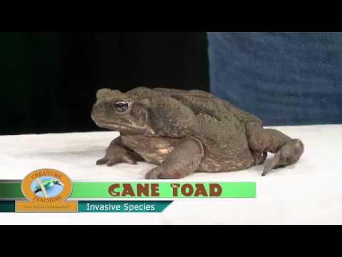 The Creature Teachers: Episode 6 - Invasive Species