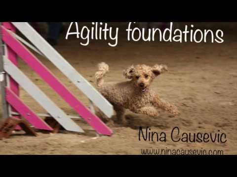 Agility foundations, motivation and speed
