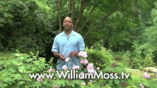 William Moss Explains How to Grow and Take Care of Roses