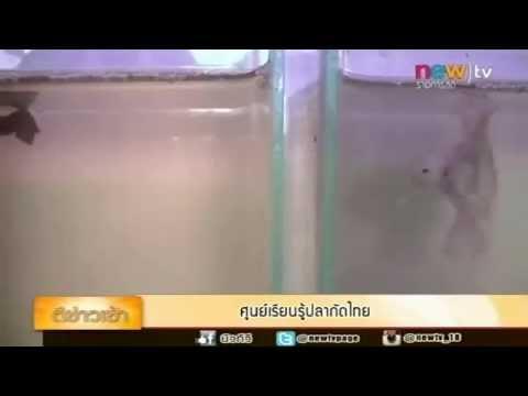 ศูนย์เรียนรู้ปลากัดไทย