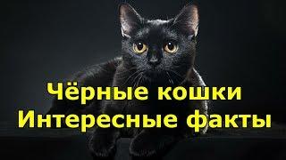 Черные кошки интересные факты и фотоподборка.