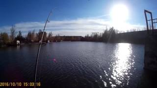 Форель на спінінг(платник риболовля у Бородіна)