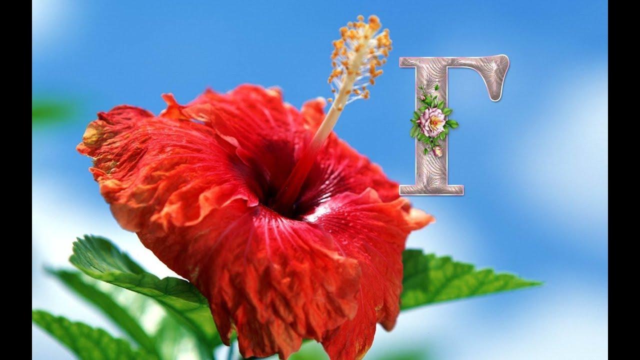 Комнатный цветок 5 букв на к