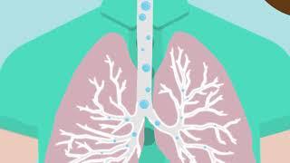 Lern-Videoclip 2: Wir atmen. Weisst du, was sich dabei im Körper abspielt?