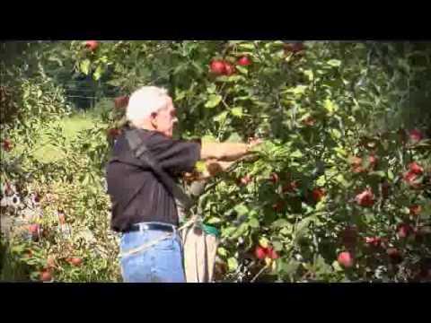 Red Apple Barn Pick Your Own Apples in Ellijay, Georgia ...