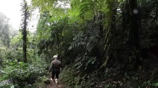 VIDEO 360: Entra en la selva que creó un solo hombre con 50.000 árboles