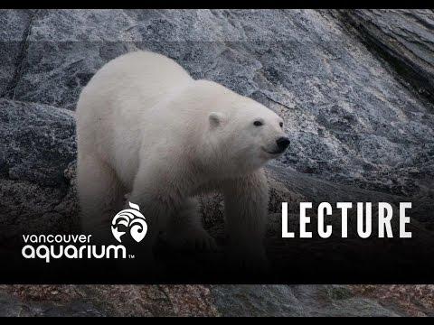 Arctic Marine Life Course (Polar Bears)
