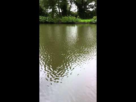 swingtip fishing