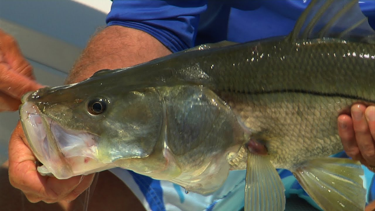 Florida everglades fishing videos for backcountry snook for Chokoloskee fishing report