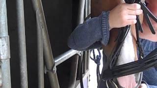 Cabezada de caballo (como colocarla) Zelai Alai