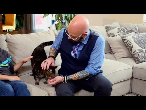 Jackson Galaxy Meets Tara: The Hero Cat Who Fought Off An Attacking Dog