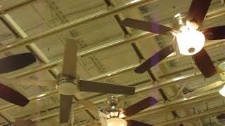 Ceiling Fans at an another Frederick Home Depot (2015)