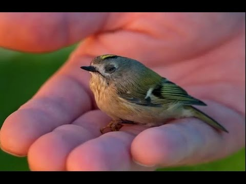 Top 10 Smallest and Cutest Birds In The World !!