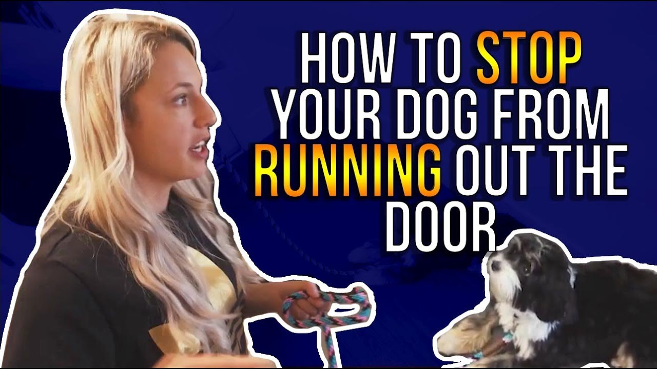How To Stop Your Dog From Running Out The Door Youtube